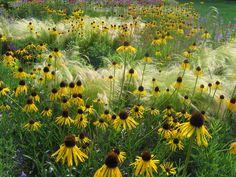 Ein pflegeleichter Garten, der in den schönsten Farben leuchtet und in dessen Gräsern sich das Sonnenlicht fängt – Präriegärten versprechen genau das.