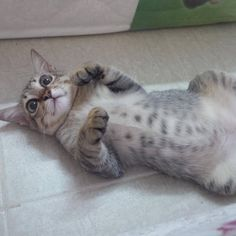 Surprise cute cat http://ift.tt/2fXU4HI