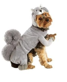 Squirrel dog costume - so wrong it's right?! It's holding an acorn!