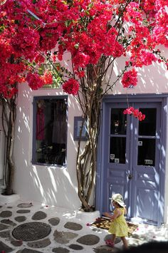 Bougainvillea in Mykonos, Greece                                                                                                                                                      More