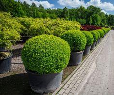 #parkertech #kerteszet #faiskola #debrecen #gardenart #gardening #nursery #horticulture #park #garden #technology #nature #shaped #plants Park, Gardening, Plants, Collection, Lawn And Garden, Parks, Plant, Planets, Horticulture