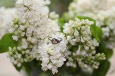 Zoe champagne diamond petal inspired ring platinum oxidized white diamond pave
