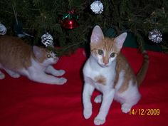 Two of the sweet babies Renata was carrying when she came to us starving.