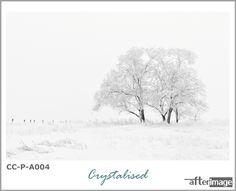 """When you accept what is, every moment is the best moment.."" — Eckhardt Tolle ""Crystalised"" . . . #afterimage #afterimagecanvas #wallartdecor #wallartprint #wallartforsale #interiorart #interiorprints #interiorposter #hangingart #canvasprintsforsale #printedcanvas #photographyprintsforsale #artdecor #artdecoration #natureinspired #decorsouthafrica #wallartsouthafrica #homedecorsa #snowscapes #blackandwhite #printedart #photoprints #fantasticearth #transformyourspace #snowphotography"