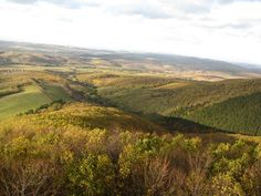 Vineyard, River, Mountains, Nature, Outdoor, Outdoors, Naturaleza, Vine Yard, Vineyard Vines