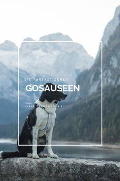 Die Gosauseen sind drei zum Salzkammergut gehörende Seen im Gosautal in Oberösterreich, kurz nach der Grenze Salzburg. Salzburg, Movie Posters, Movies, Amazing Places To Visit, Travel Report, Hiking, Films, Film Poster, Popcorn Posters