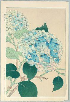 Hydrangea - by Shodo Kawarazaki 1889-1973