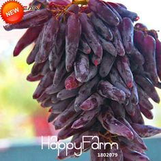 Best-Selling!100 PCS/Pack 12 Kinds of Grape Seeds Advanced Fruit Seed Natural Growth Grape Sweet Kyoho Gardening,#6T7EXB