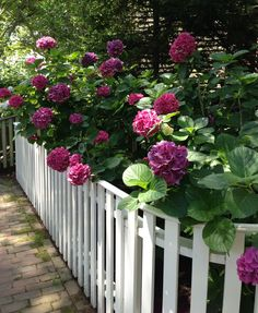 Classic Nantucket town fence. THE LITERAL WHITE PICKET FENCE! YES, I WANT!