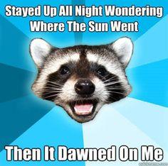 Lame pun raccoon!