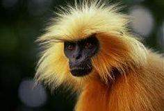 Monkeys will rule the world