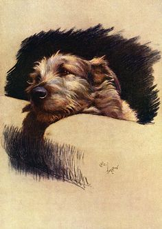 Hahnemuhle PHOTO RAG Fine Art Paper (other products available) - Study of Mickie, Cecil Aldin& Irish Wolfhound, with his head resting on the arm of a chair. Date: 1932 - Image supplied by Mary Evans Prints Online - Fine Art Print on Paper made in the UK Animal Art Prints, Border Terrier, Dog Paintings, Jack Russell Terrier, Wildlife Art, Dog Portraits, Illustrations, Poster Prints, Canvas Prints