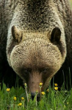 coisasdetere:  Urso …