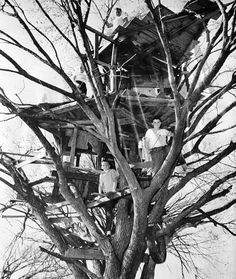 tree house 1960 the best ones were built with junk from the neighborhood