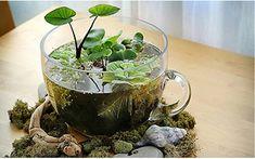 Como Crear un Jardin Acuatico - Para Más Información Ingresa en: http://jardinespequenos.com/como-crear-un-jardin-acuatico/