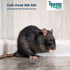 Rats can damage the infrastructure of your property, along with posing a severe threat to your health.  Tradie Team is an Australian owned pest control company. We use eco-friendly pesticides to eradicate rat infestation. Mice Removal, Rat Infestation, Rat Control, Pest Control Services, Rats, Melbourne, Eco Friendly, Health, Animals