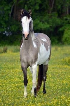 Grulla Paint - absolutely gorgeous color