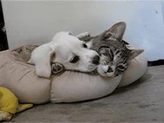 개와 고양이의 행복한 공존