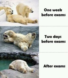 As we approach finals week here at #ovct, we hope you're not like the polar bear in photo 2. Best of luck to all #students !