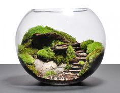 Terrarium design idea