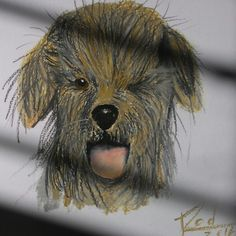 Hairy dog, oil pastel by Rod Normando