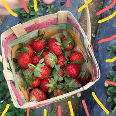Aesthetic Food, Pink Aesthetic, Baby Food Recipes, Healthy Recipes, Sestri Levante, Strawberry Fields Forever, Berry Picking, Aesthetic Pictures, Food And Drink
