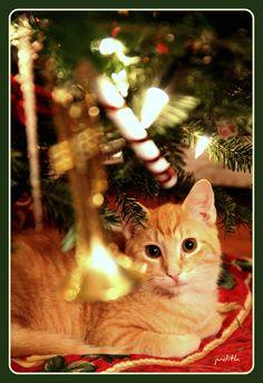 Merry Christmas Ginger