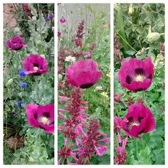 More Purple Poppies Purple Poppies, Girl Photos, Bugs, Fruit, Flowers, Plants, Style, Girl Pics, Swag