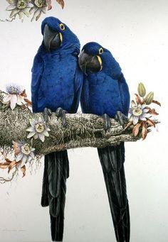 exotic birds -