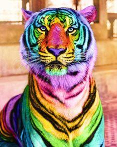 Animals: The Magnificent Rainbow Makeover Edition – I Can Has Cheezburger? - Animals: The Magnificent Rainbow Makeover Edition Baby Animals Super Cute, Cute Little Animals, Cute Funny Animals, Cute Dogs, Baby Animals Pictures, Animals And Pets, Rainbow Art, Rainbow Colors, Rainbow Nails