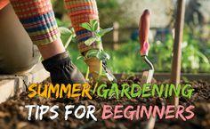 Summer Gardening Tips For Beginners