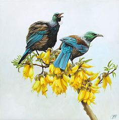 Art by the Sea art gallery specializes in fine NZ arts and crafts, with a huge range of original, fine New Zealand and Maori arts and crafts. Oil Painting Flowers, Artist Painting, Bird Artists, Wildlife Paintings, Bird Paintings, Nz Art, Bird Poster, Maori Art, Mountain Paintings