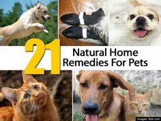 It's no secret that people love their pets. This year Americans are expected to spend $26 billion dollars on medicine, treatments and vet appointments for their animal companions. But just because we love our pets doesn't mean that we have to spend tons of money on their healthcare. Many common ailments pets suffer can be …
