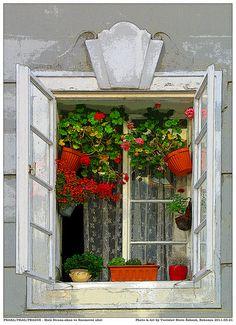 A delightfully flower-cluttered window in Prague