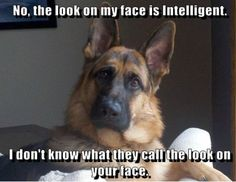 yes, the look on my face is intelligent - Google Search