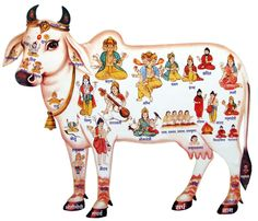 Sacred Indian cow.