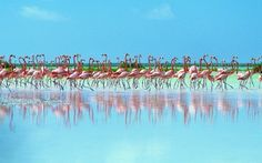 Flamingos - got to be happy looking at this