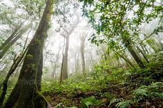 tree forest in autumn season of thailand ...  area, autumn, beech, branch, deciduous, dirt, environment, fall, fog, foliage, footpath, forest, green, growth, hiking, horizontal, illuminated, land, landscape, lane, leaves, light, lush, mist, moss, natural, nature, outdoors, park, plant, scene, season, stem, sun, sunbeam, sunlight, tranquil, tree, vitality, wilderness, woods