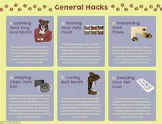 20 Useful Lifehacks Every Pet Owner Should Know | IFLScience