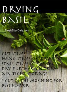 Drying Basil at FreshBitesDaily.com