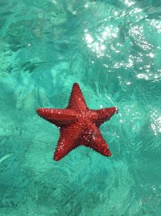 The best things to do in the Exuma Cays (Bahamas) including searching for starfish. Vacation Destinations, Vacation Trips, Dream Vacations, Vacation Spots, Vacation Places, Nassau, Exuma Bahamas, Bahamas Trip, Oh The Places You'll Go
