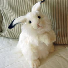 Hansa Arctic Hare   Realistic Stuffed Rabbit   Plush Hansa Bunny   Hansa Animals.....I have been disappointed in the so called realistic Snow Hare and Rabbit. Did not keep them.