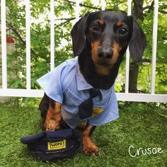 """I take my hat off in solitude to all the police officers killed or wounded, and their families, in #Dallas"" ~ Crusoe"