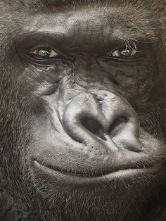 I find it amazing to stare into the eyes of monkeys and gorillas. The human resemblance is uncanny.