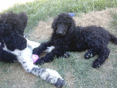 Molly loves playing with her puppy!