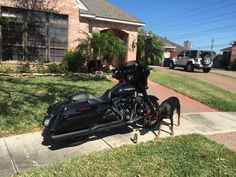 My two black beauties/ Harley Davidson / Dobermans/ street glide