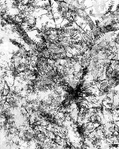 Dendrite Rhizome Images