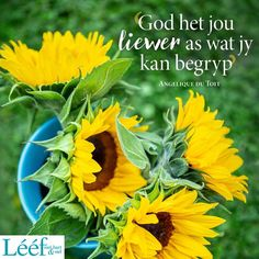 Afrikaans Quotes, Herbs, Plants, Herb, Plant, Planets, Medicinal Plants