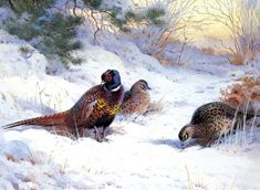 Premium Giclee Print: Pheasant and Two Hens Art Print by Archibald Thorburn by Archibald Thorburn : Charity Christmas Cards, Personalised Christmas Cards, Christmas Wishes, Xmas Cards, Christmas Greetings, Winter Christmas, Christmas Preparation, Snow Scenes, Vivid Colors