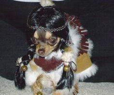Native American chihuahua